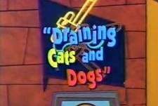 Draining Cats And Dogs The Cartoon Pictures