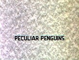 Peculiar Penguins Cartoon Character Picture