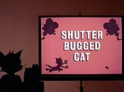 Shutter Bugged Cat Picture Of Cartoon