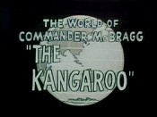 The Kangaroo Cartoons Picture