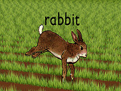 Rabbit Cartoon Picture
