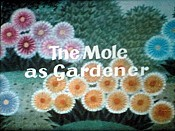 Krtek Zahradnikem (The Mole As A Gardener, The Mole As Gardener) Cartoon Picture