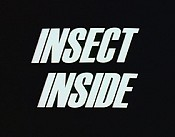 Insect Inside Picture Into Cartoon