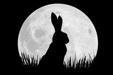 Watership Down Pictures In Cartoon
